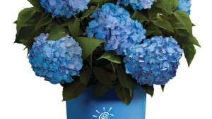 Bailey Nurseries Wins the  2014 Medal Of Excellence For Marketing