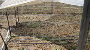 California Cut Flower Farmers Help Launch Sustainability Program