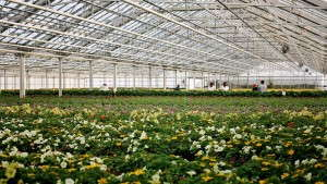 Bayer Production Ornamentals Hits The Market With 17 Products And More Coming
