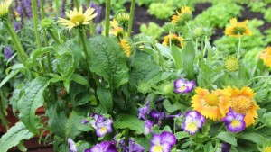 Shake Up  Combos With Perennials And  Flowering Potted Plants