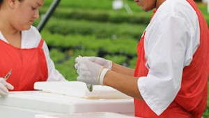 Ball FloraPlant's Las Limas Facility Provides Growers With Clean Stock And Nicaragua With Jobs