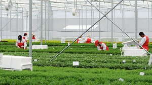 Ball FloraPlant Eliminates Neonicotinoid Use On Its Offshore Cuttings Farms