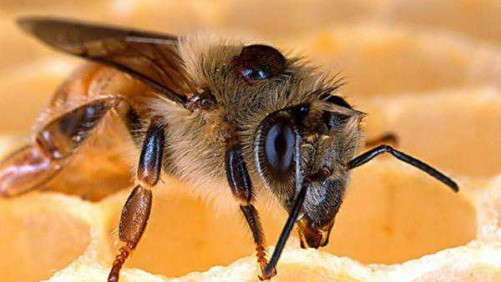 Pollinator Stewardship Task Force Identifies Research Agenda