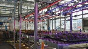 Defining Precision Horticulture