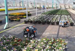 Harvest Automation - Grower Direct