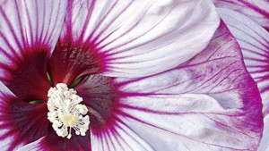 Popular BiColor Varieties for Spring from Proven Winners [Sponsor Content]