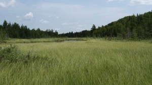 How the Canadian Peat Moss Industry is Working to Restore Peatlands
