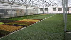 Pleasant View Gardens Now Neonic Free on Liners