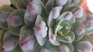 Succulents And Miniatures  Offer Variety And Easy Growing