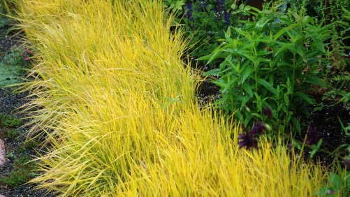 Ornamental Grasses Bring Low Maintenance To The Landscape