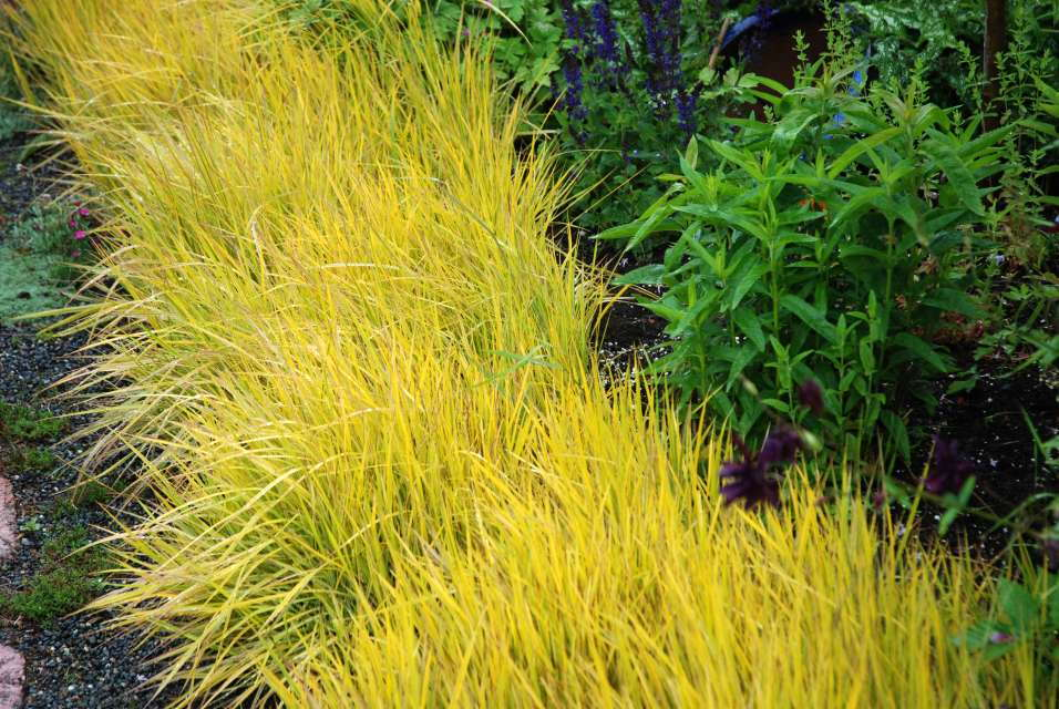 Ornamental grasses bring low maintenance to the landscape for Variegated ornamental grass varieties
