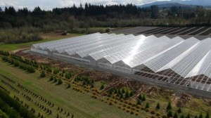 Aerial view of Conley's Gable Series 7500 Greenhouse Range, installed at Fall Creek Farm & Nursery in Lowell, Ore.