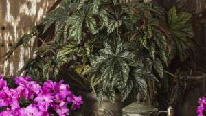 12 Colorful Shade Plants From Proven Winners (Sponsor Content)