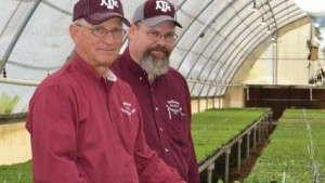 Southwest Perennials Improves Production, Shortens Crop Time With LEDs
