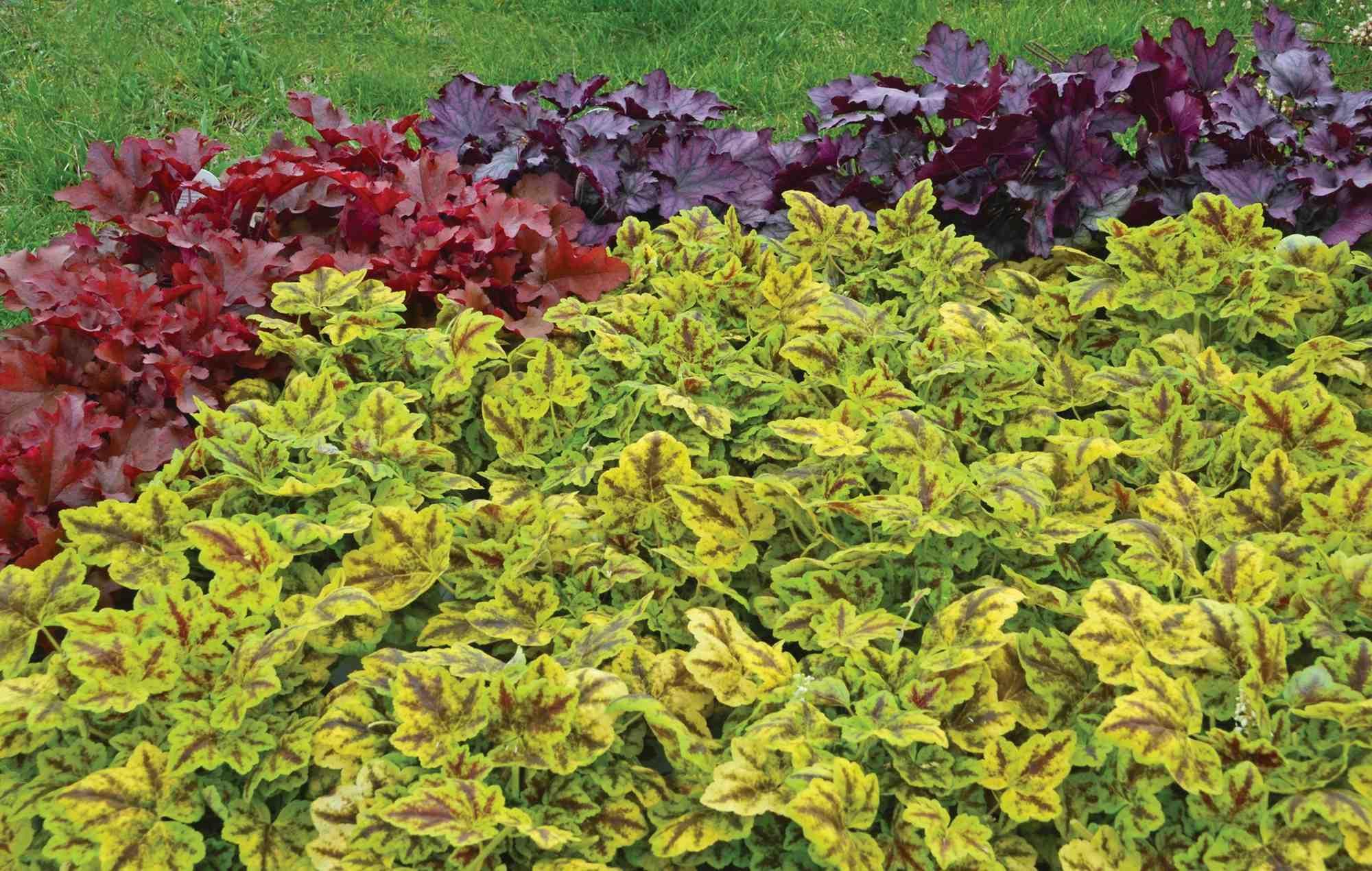 Perennials favoritos del sol