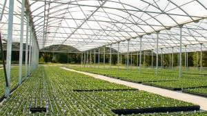 Three Strategies For Overcoming Greenhouse Heating Concerns