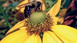 Restricting foliar pesticide applications on blooming plants to early morning or as dusk approaches in the evening reduces direct exposure to bees.