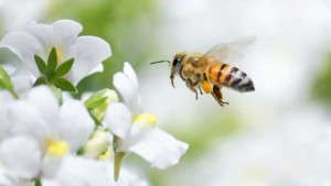 Pollinator Initiative Promotes Bee-Friendly Talking Points