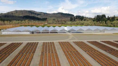 Conley's Helps Fall Creek Farm And Nursery Increase Blueberry Production