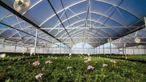 Emerald Coast Growers Steps-Up Production Efficiency And Broadens Its Phlox Program