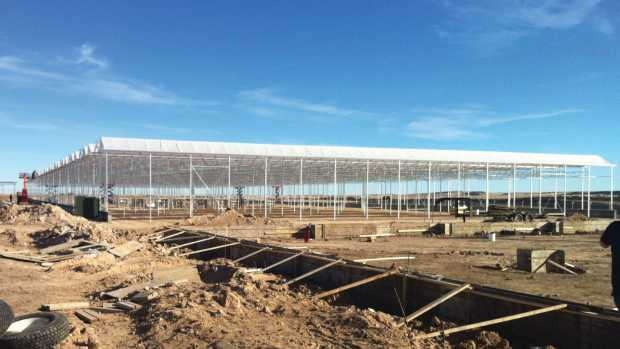 Greenhouses Are More Efficient For Marijuana Production