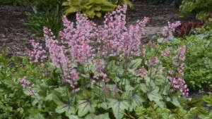 Intergeneric Crosses Are A New Perennial Trend