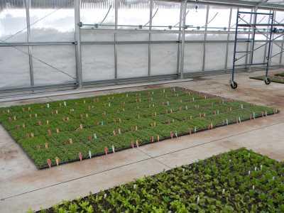 Longfellow's Heat Curtain, Winter Microgreens_Cozy Acres Greenhouses_zero emissions
