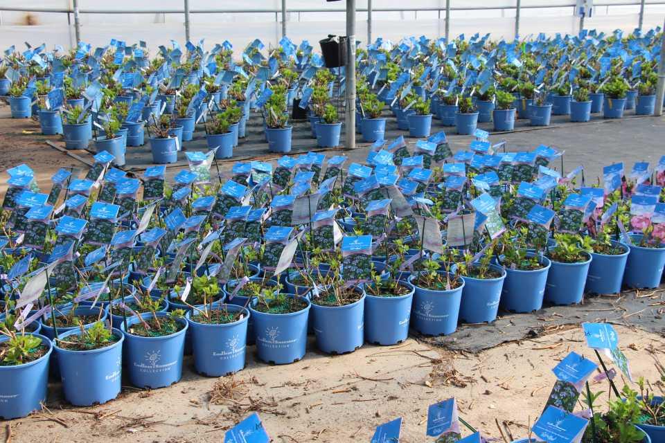 Bailey Nurseries Minnesota Expo 2017 Takes Place July 30 Greenhouse Grower