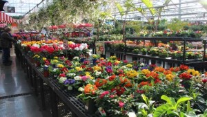 2015 National Floriculture Forum Focuses On Marketing Initiatives