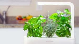 Smartpot Uses Sensors And Cartridges To Ensure Success In Growing
