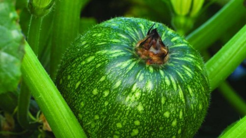 18 New Vegetables For Easy Growing And Healthy Eating