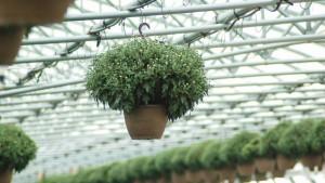 Green Mum Basket