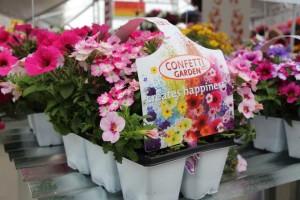 Dummen_build your own Confetti Garden packs