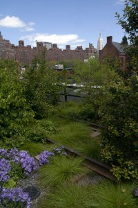 The High Line in New York blends 210 species of perennials, grasses, shrubs and trees in a primarily native, low-maintenance landscape. Image courtesy of Lucas Nebuloni/Flickr.