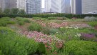Lurie Garden Millennium Park