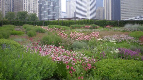 Eco-Conscious Landscapes Fast Track The Rise Of Grasses  And Native Plants