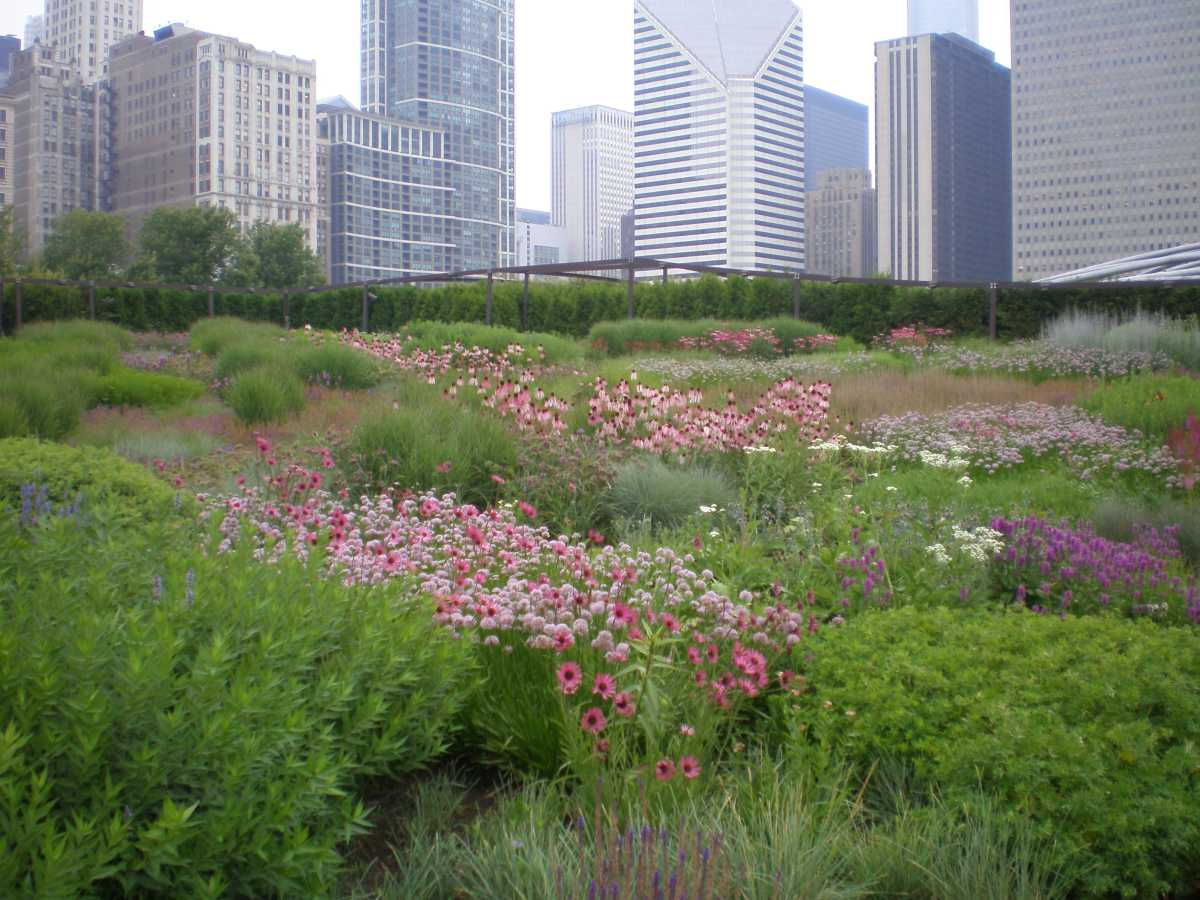 Eco Conscious Landscapes Fast Track The Rise Of Grasses And Native