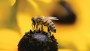 Bees And Pesticides
