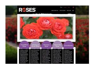 www buyroses365