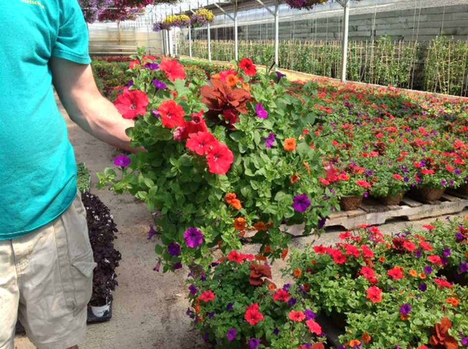 Oakland Nursery Simplifies Streetscape Plantingaintenance In Columbus Ohio Greenhouse Grower