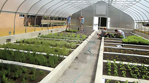 Michigan State University's Bailey GREENhouse Sells Produce And Tea To Campus Dining Facilities