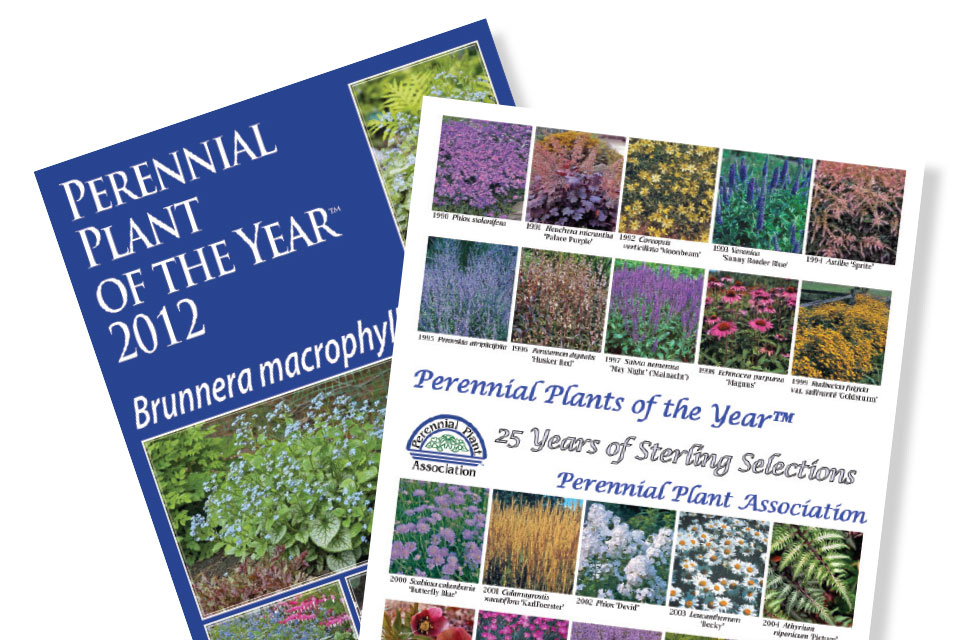 Retailers have traditionally embraced Perennial Plant Of The Year marketing materials.