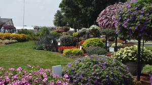 Learn Tips on Plant Production and Using Social Media at the Northeast Greenhouse Conference