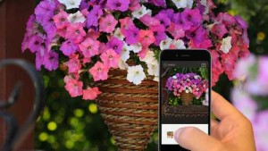 WavePetunias-GrowIt_contest_featured