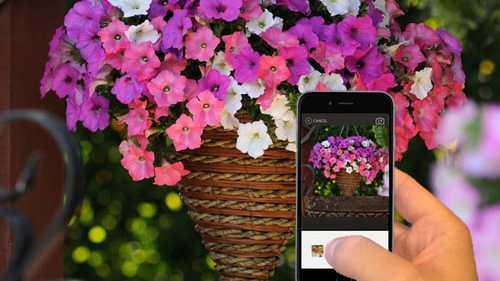 Wave Petunias Sponsors Photo Contest Through GrowIt! Garden Socially App
