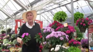 Allan Armitage: Let's Talk About Starflowers. Why Is Pentas Not More Popular?