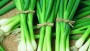 Bunching onion warrior