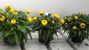 Bioworks Releases New Higher Nitrogen Fertilizer For Ornamental Crops