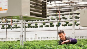 In Hot Pursuit  Of Heating Trends For The Greenhouse