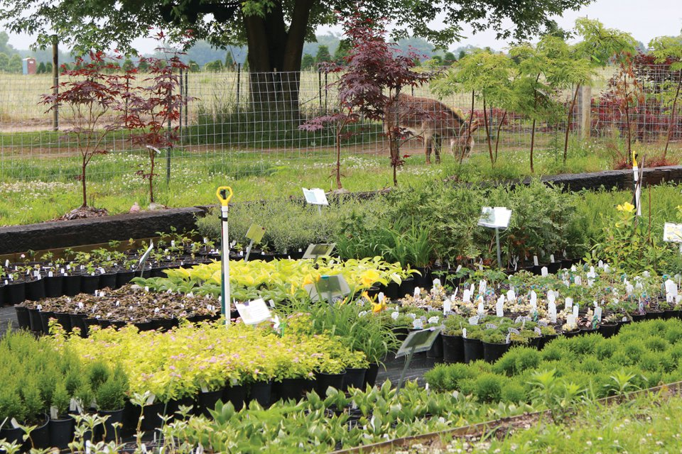 Mike's Backyard Nursery sells mostly flowering shrubs in 2-quart pots